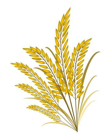 pflanzen: Umweltkonzept, Vektor-Illustration der goldenen Reif Reis oder Getreide-Pflanzen mit grünen Blättern isoliert auf weißem Hintergrund