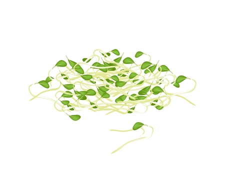Vegetable, Vector Illustration of Fresh Bean Sprouts or Pea Seedlings With Green Leaves Isolated on White Background.  Vector