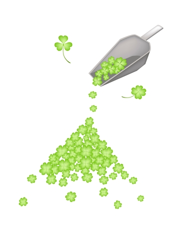 cloverleafes: Symbols for Fortune and Luck, Vector Illustration of A Metal Scoop with Fresh Four Leaf Clover Plants or Shamrock for St. Patricks Day Celebration.