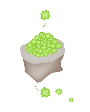 cloverleafes: Simboli per la fortuna e la fortuna, illustrazione vettoriale di Fresh Four Leaf Clover piante o Shamrock in un sacchetto di tela per St. Patricks Day Celebration.