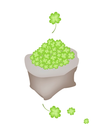 cloverleafes: Symbols for Fortune and Luck, Vector Illustration of Fresh Four Leaf Clover Plants or Shamrock in A Canvas Bag for St. Patricks Day Celebration.