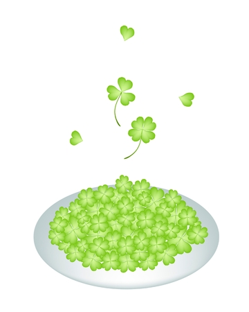 cloverleafes: Symbols for Fortune and Luck, Vector Illustration Heap Of Fresh Four Leaf Clover Plants or Shamrock on A Beautiful White Dish for St. Patricks Day Celebration.