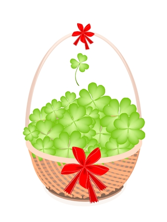 cloverleafes: Symbols for Fortune and Luck, Vector Illustration of Fresh Four Leaf Clover Plants or Shamrock with Red Ribbon and Bow on A Beautiful Wicker Basket for St. Patricks Day Celebration.