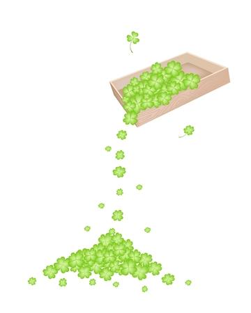 cloverleafes: Simboli per la fortuna e la fortuna, illustrazione vettoriale Mucchio di Fresh Four Leaf Clover piante o Shamrock Cadere da scatola di legno sul pavimento per St. Patricks Day Celebration.