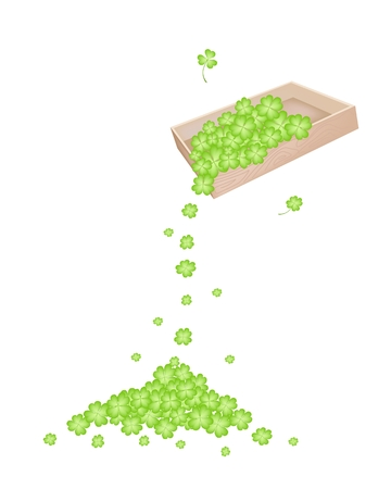 cloverleafes: Symbols for Fortune and Luck, Vector Illustration Heap of Fresh Four Leaf Clover Plants or Shamrock Falling from Wooden Box on The Floor for St. Patricks Day Celebration.