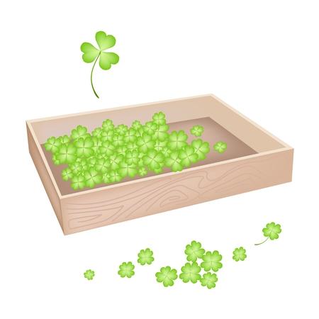 cloverleafes: Simboli per la fortuna e la fortuna, illustrazione vettoriale Mucchio di Fresh Four Leaf Clover piante o Shamrock in scatola di legno per St. Patricks Day Celebration.