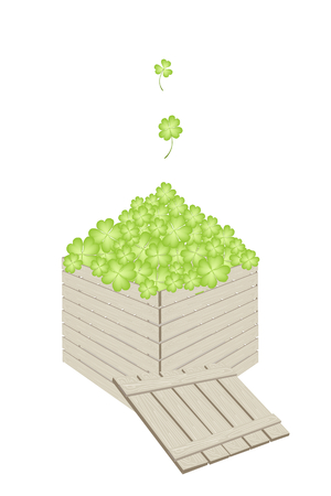 cloverleafes: Symbols for Fortune and Luck, Vector Illustration of Fresh Four Leaf Clover Plants or Shamrock in Wooden Crate for Delivery and Send to St. Patricks Day Celebration.  Illustration