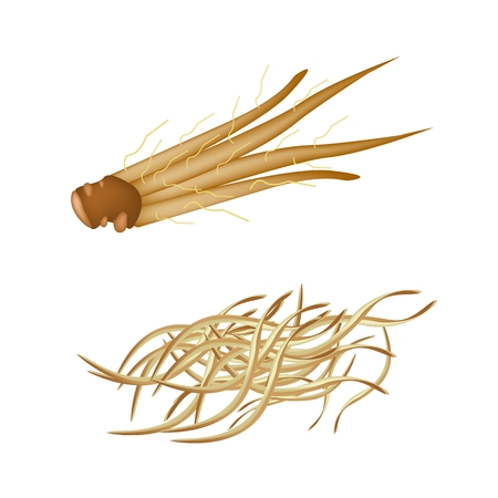 tuberous: Vegetable and Herb, Illustration of Fresh Julienne Fingerroot, Chinese Ginger and  Boesenbergia Used for Seasoning in Cooking.