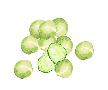 Vegetable, Vector Illustration A Pile of Delicious Fresh Green Brussels Sprout Isolated on White Background.  Illustration