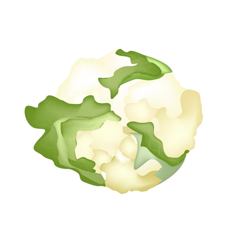brassica: Vegetable, Vector Illustration of Delicious Fresh White Cauliflower and Green Leaf Isolated on White Background.