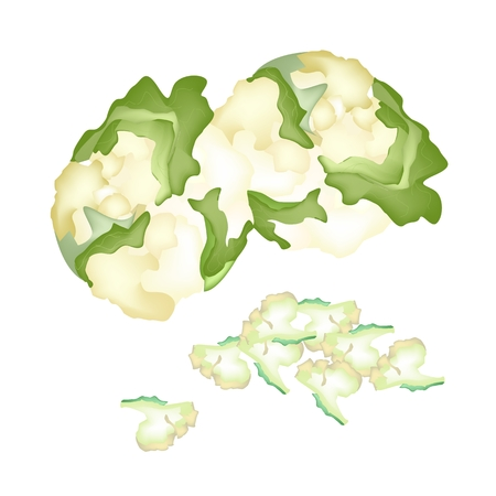 Vegetable, Vector Illustration of Delicious Fresh Cauliflower and Chopped Cauliflower with Green Leaf Isolated on White Background.  Vector