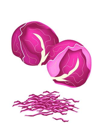 Vegetable, Vector Illustration of Delicious Fresh Purple Cabbage with Julienne Purple Cabbage Isolated on White Background.  Vector