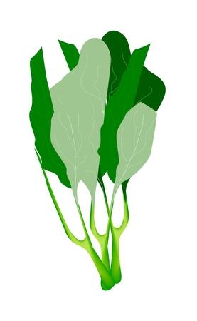 野菜、おいしい新鮮な緑カイランまたは中国ブロッコリーの白い背景で隔離のベクトル イラスト。
