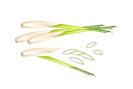 lemon grass: Vegetable and Herb, Vector Illustration of A Stack of Fresh Lemon Grass with Slice Lemon Grass for Seasoning in Cooking.
