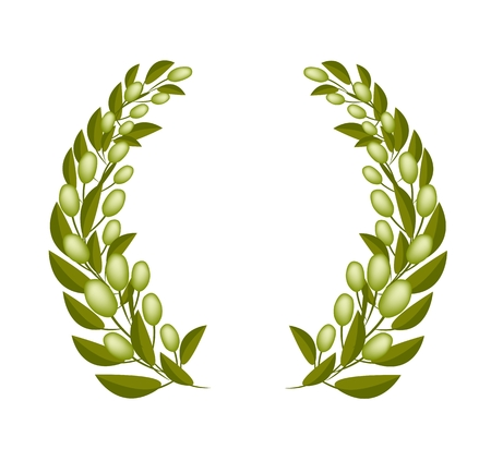 Vector Illustration of Beautiful Laurel Wreath of Fresh Green Olive and Leaves Isolated on White Background.  Vector