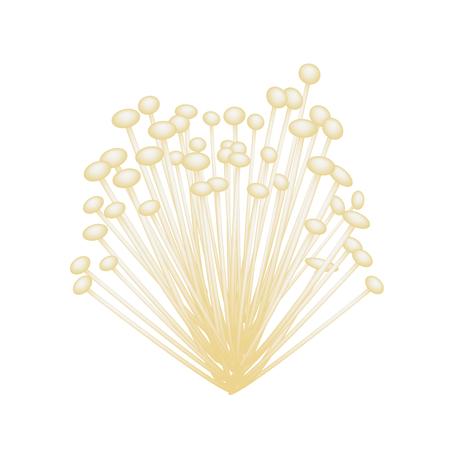 Vegetable, Vector Illustration of Fresh Cluster of White Enoki Mushrooms Isolated on A White Background.   Illustration