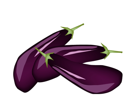 Vegetable, Illustration Stack of Fresh Purple Eggplants Isolated on White Background  Vector