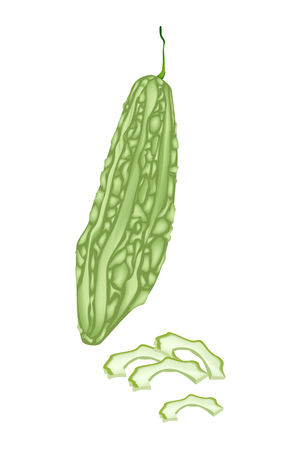 Vegetable and Herb, Vector Illustration of Whole and Sliced Balsam Pear, Balsam Apple, Bitter Gourd and Bitter Melon Isolated on White Background  Illustration