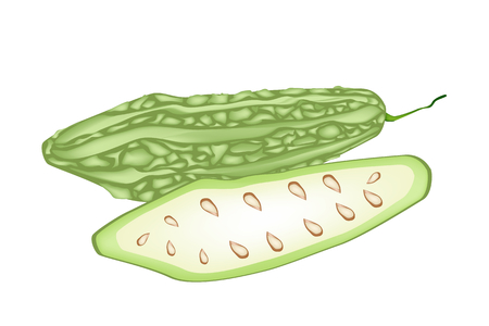 bitter fruit: Vegetable and Herb, Vector Illustration of Whole and Half Balsam Pear, Balsam Apple, Bitter Gourd and Bitter Melon Isolated on White Background  Illustration