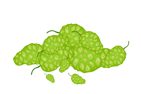 great morinda: Vegetable and Herb, Vector Illustration Stack of Fresh Noni, Morinda Citrifolia, Great Morinda, Indian Mulberry, Beach Mulberry or Cheese Fruit.   Illustration
