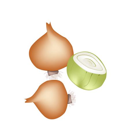 orange peel clove: Verdura e Herb, illustrazione vettoriale di intere e mezzo freschi oro Cipolle usate per condire in Cooking.
