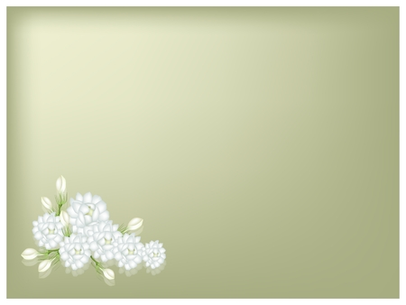 Beautiful Flower, An Illustration of Fresh White Jasmine Flowers on Green Leaves on Green Background with Copy Space for Text Decorated.  Vector