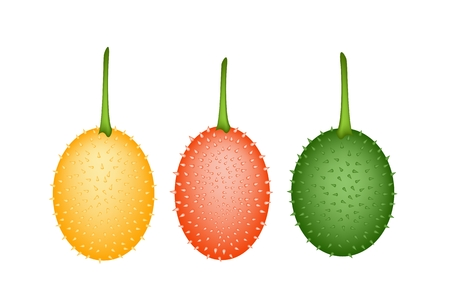 bitter: Vegetable and Herb, An Illustration of Fresh Gac Fruit, Teasel Gourd, Baby Jackfruit, Spiny Bitter Gourd, Sweet Gourd or Cochinchin Gourd Isolated on White Background.