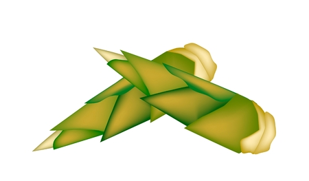 Vegetable, An Illustration of Two Fresh Bamboo Shoots Isolated on White Background.