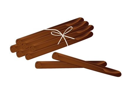 cinnamon sticks: Vegetable and Herb, An Illustration of Bundle of Dried Cinnamon Sticks Used for Seasoning in Cooking.