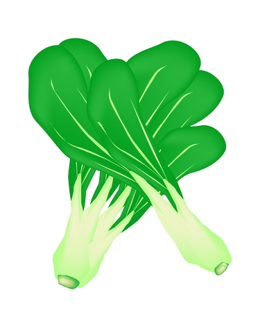 brassica: Vegetable, An Illustration Stack of Delicious Fresh Baby Pakchoi, Bok Choy, Pok Choi or Pak Choi Isolated on White Background.