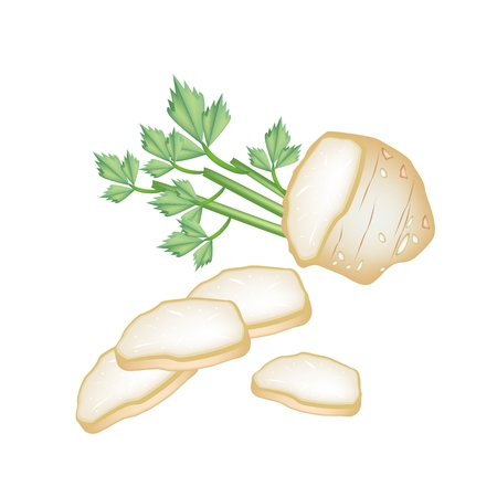 Vegetable and Herb, An Illustration Sliced Celery Root with Leaves Used for Seasoning in Cooking.  Vector