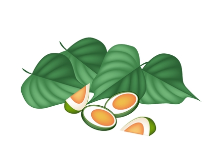 An Illustration of Half Areca Nut and Betel Leaves, Asian Traditional Chewing Gum to Make Teeth Stronger.  Vector