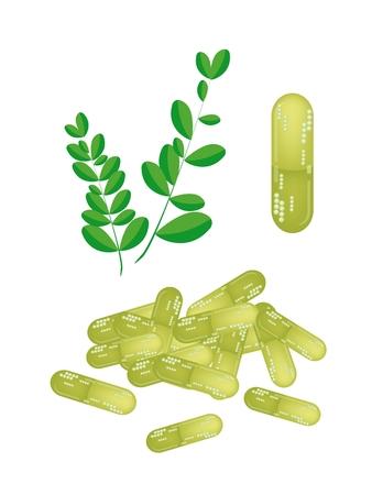 mlonge: Verdura e Herb, l'illustrazione di un fresche di Moringa foglie con le pillole Capsule sono ricchi di proteine, vitamina A, vitamina B, vitamina C e minerali.