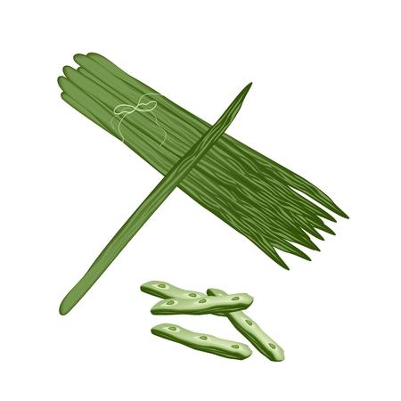 mlonge: Verdura e Herb, L'illustrazione di Moringa oleifera foglie e frutti sono ricchi di proteine, vitamina A, vitamina B, vitamina C e minerali. Vettoriali