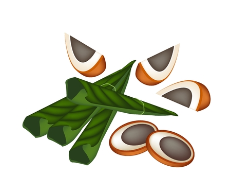 An Illustration of Ripe Areca Nut Chewed with Betel Leaves, Asian Traditional Chewing Gum to Make Teeth Stronger.