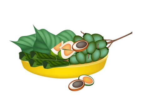 An Illustration of Ripe Areca Nut Chewed with Betel Leaves on Golden Tray, Asian Traditional Chewing Gum to Make Teeth Stronger.  Illustration