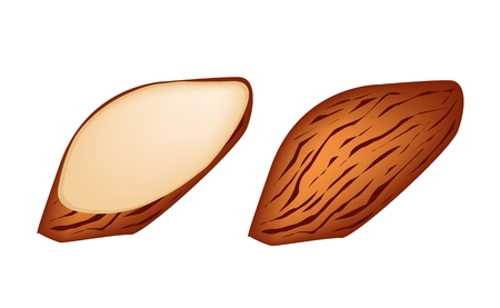 dietary fiber: Illustration of Whole Almond and Slice Almond Isolated on White Background, Good Source of Dietary Fiber, Vitamins and Minerals.  Illustration