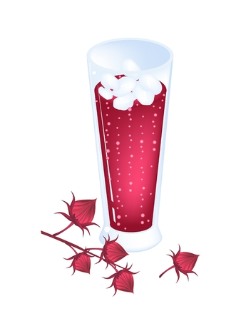 sorrel: Food and Herb, An Illustration Parts of Fresh Hibiscus Sabdariffa or Roselle Plant with Blossoms, Leaves and Fruits.  Illustration