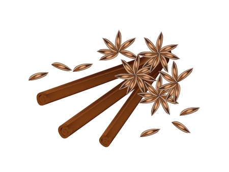 Vegetable and Herb, A Pile of Dried Star Anise, Star Aniseed or Illicium verum with Cinnamon Sticks Used for Seasoning in Cooking.   Vector