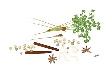 koriander: Egy rakás kínai fűszerek, szárított csillagánizs, fahéjat, száraz bors, fokhagyma és a koriander ízesítésre használjuk a főzéshez. Illusztráció