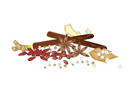 allspice: Vegetable and Herb, A Pile of Dried Star Anise, Cinnamon Sticks, Dry Peppercorns, Tumeric Roots, Ginger Roots, Siamese Cardamom  Used for Seasoning in Cooking.  Illustration