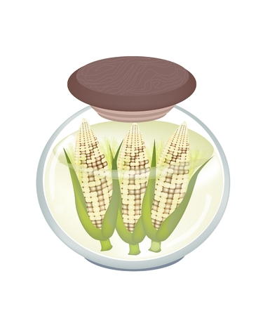 Vegetable, Illustration of Sweet Corns in Brine of Water and Salt in A Glass Jar Isolated on White Background.  Vector
