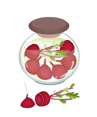 condiment: Illustration of Delicious Pickled Radishes or Marinated Beets in Vinegar, Sugar, Salt and Condiment in A Glass Jar Isolated on White Background.  Illustration
