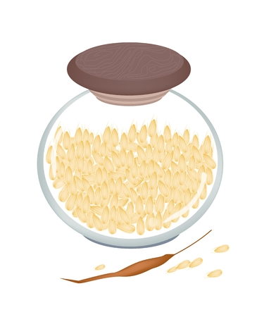 Vegetable, An Illustration of Ripe Millet  or Sorghums in A Glass Jar, Good Source of Vegetable Protein.  Vector