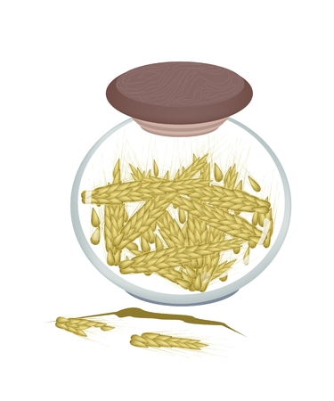 rice and beans: Vegetable, An Illustration of Golden Ripe Wheats in A Glass Jar, Good Source of Vegetable Protein.