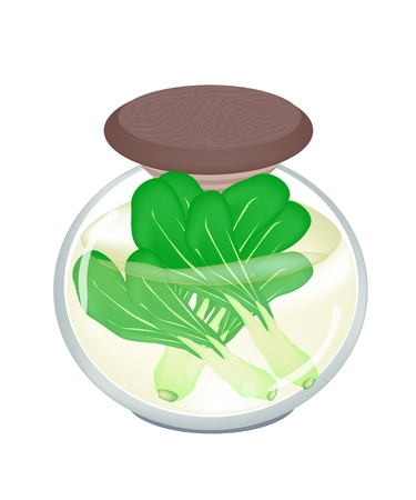 brassica: Vegetable, An Illustration of Pickled Baby Pakchoi, Bok Choy, Pok Choi or Pak Choi in Brine of Vinegar and Salt in A Glass Jar Isolated on White Background.  Illustration