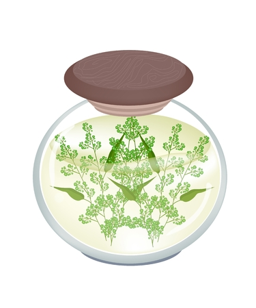 quinine: Vegetable, Illustration of Pickled Margosa or Neem Leaves and Blossom in Brine of Vinegar and Salt in A Glass Jar Used as Healthy Foods and Herbal Medicines.