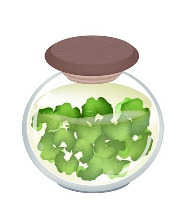 asiatic: An Illustration of Medicinal Centella Asiatica, Asiatic Pennywort, Thankuni or Gotu Kola in A Glass Jar, Herb Alternative Medicine for Arthritis and Juice.