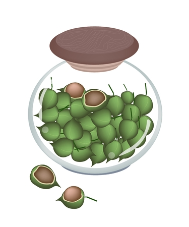 macadamia: Shelled and Unshelled Macadamia Nuts in A Glass Jar, Good Source of Dietary Fiber, Vitamins and Minerals.