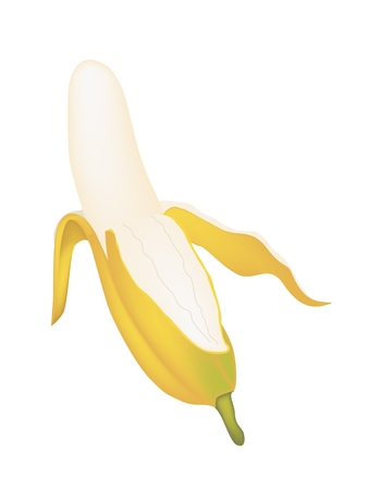 Fruit, An Illustration of Open Wild Banana, Asian Banana or Cultivated Banana Isolated on A White Background.  Illustration